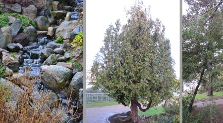 Rakennettu puro kasvitieteellisen kivikkokasviosastolla (vas). Thuja occidentalis 'Mastersii' (keskellä) ihastutti hauskalla alhaalta-ylös-kasvutavallaan. Ilex, orjanlaakeri Tanskan malliin, korkeutta useita metrejä. (oik).